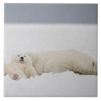A polar bear cub lies in snow with it's mother ceramic tile