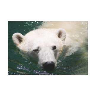 a polar bear just chilling gallery wrapped canvas