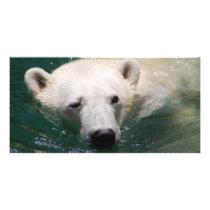 A polar bear just chilling card