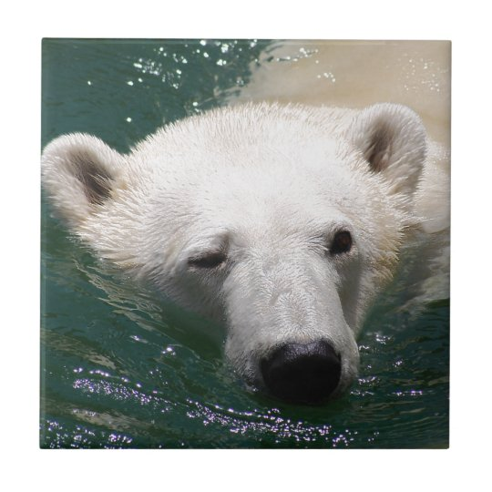 A polar bear just chilling ceramic tile