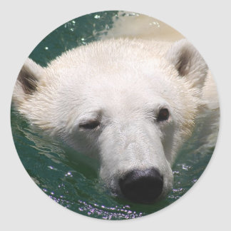 A polar bear just chilling classic round sticker