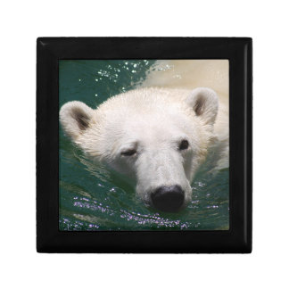 A polar bear just chilling gift boxes