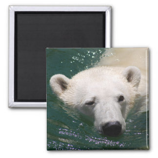 A polar bear just chilling magnet