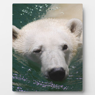 A polar bear just chilling plaque