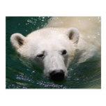 A polar bear just chilling post card