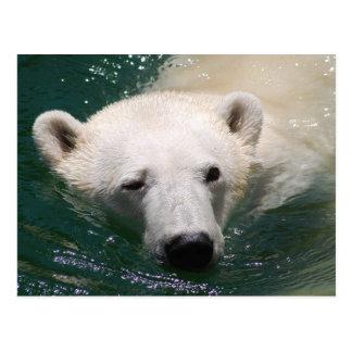 A polar bear just chilling postcard