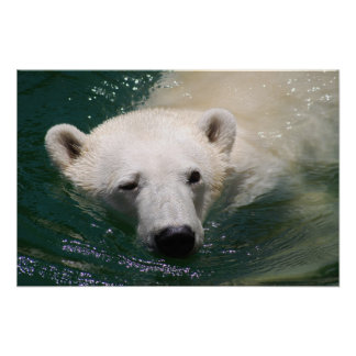 A polar bear just chilling poster