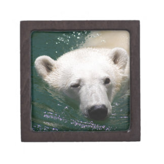 A polar bear just chilling premium trinket boxes