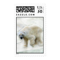 A polar bears icy cold postage