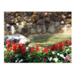 A Pond with Red Flowers  Postcard