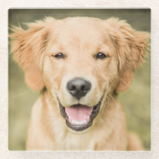 A Portrait Of A Golden Retriever Puppy Glass Coaster