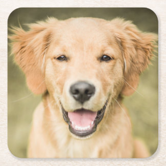 A Portrait Of A Golden Retriever Puppy Square Paper Coaster