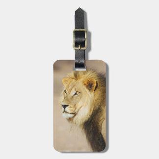 A portrait of a Lion, Kgalagadi Transfrontier Park Bag Tag