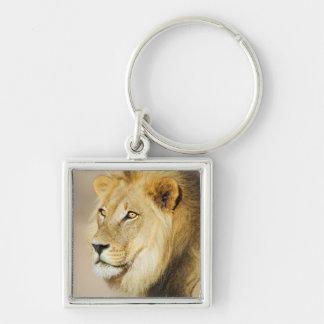 A portrait of a Lion, Kgalagadi Transfrontier Park Keychain