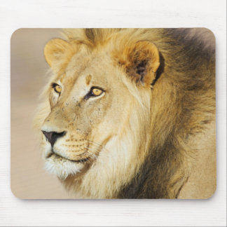 A portrait of a Lion, Kgalagadi Transfrontier Park Mouse Pad