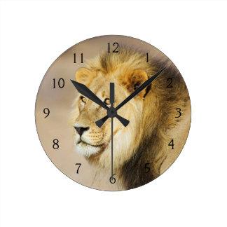 A portrait of a Lion, Kgalagadi Transfrontier Park Round Clock