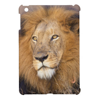A portrait of a Lion looking into the distance iPad Mini Covers