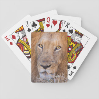 A portrait of a Lion Playing Cards