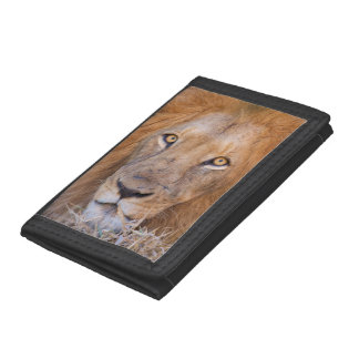 A portrait of a Lion Trifold Wallet