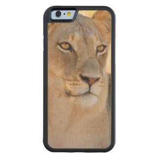 A portrait of a Lioness looking into the distance Carved Maple iPhone 6 Bumper Case