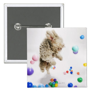 A Portuguese Waterdog jumping amongst falling 2 Inch Square Button