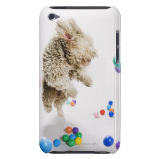 A Portuguese Waterdog jumping amongst falling iPod Touch Case-Mate Case