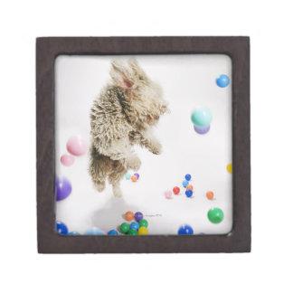 A Portuguese Waterdog jumping amongst falling Jewelry Box