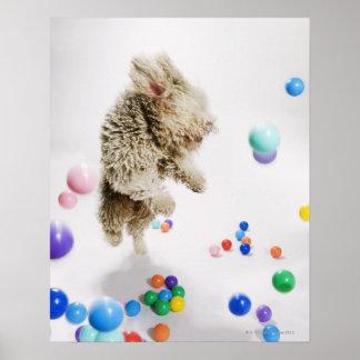 A Portuguese Waterdog jumping amongst falling Poster