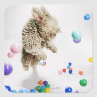A Portuguese Waterdog jumping amongst falling Square Sticker