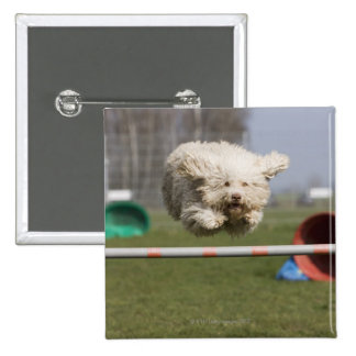 A Portuguese Waterdog jumping over a hurdle Button