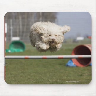 A Portuguese Waterdog jumping over a hurdle Mouse Pad