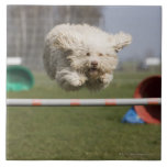 A Portuguese Waterdog jumping over a hurdle Large Square Tile