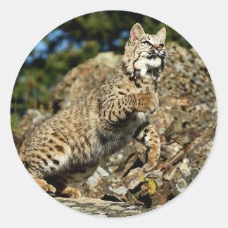 A Pouncing Bobcat Classic Round Sticker