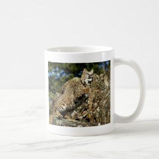 A Pouncing Bobcat Coffee Mug