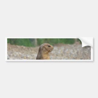 A Prairie Dog Bumper Sticker