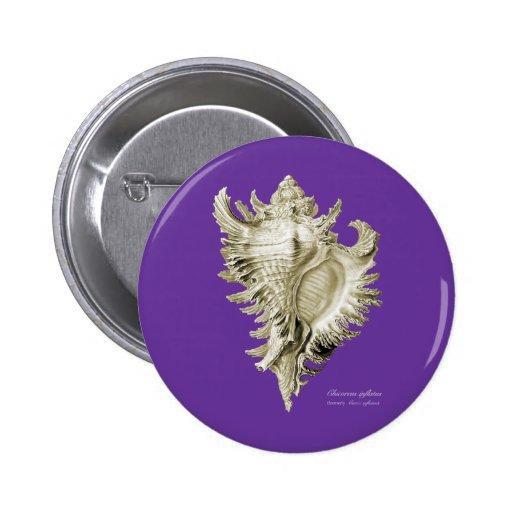 A predatory sea snail pinback button