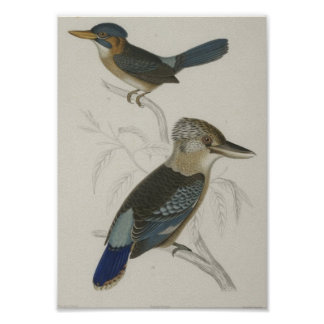 A Prevost - Kingfisher Poster