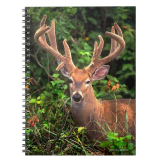 """""""A Prince of the Forest"""" Notebook"""
