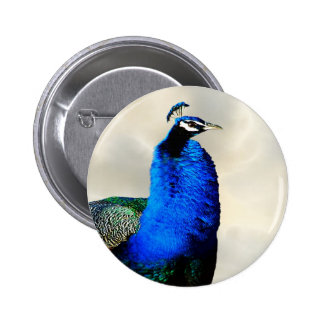 A proud peacock buttons