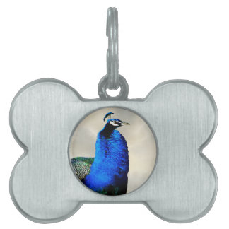 A proud peacock pet tags