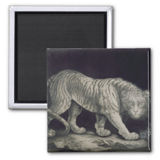 A Prowling Tiger (pencil on paper) Magnet