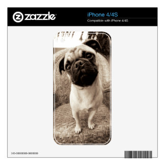 A Pug with its Head Titled to the Side Decals For The iPhone 4S