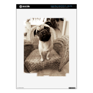 A Pug with its Head Titled to the Side Skin For iPad 3