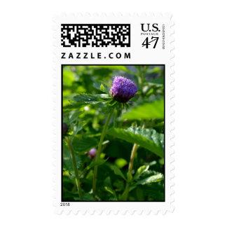 A Purple Garden Flower Postage