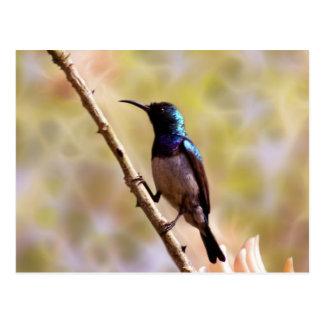 A purple Hummingbird Postcard