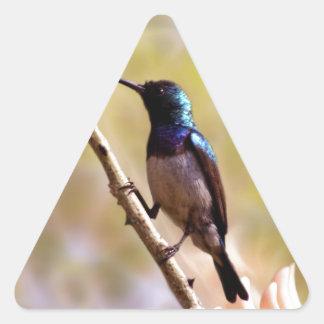 A purple Hummingbird Triangle Sticker