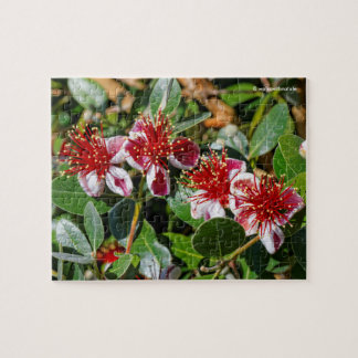 A Quartet of Pineapple Guava / Guavasteen Flowers Jigsaw Puzzle