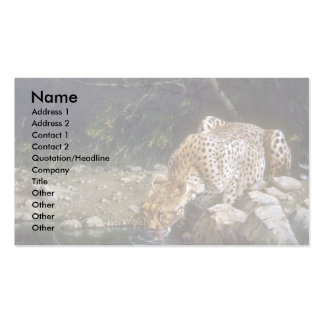 A quiet drink, Cheetah Double-Sided Standard Business Cards (Pack Of 100)