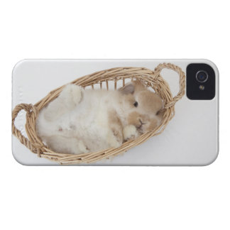 A rabbit is in a basket.Holland Lop. iPhone 4 Covers