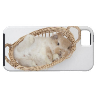 A rabbit is in a basket.Holland Lop. iPhone SE/5/5s Case